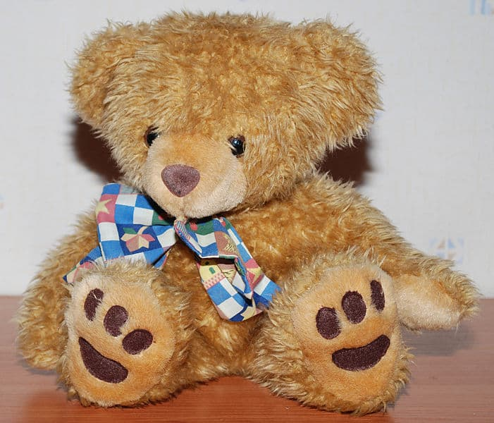 701px Teddy Bear front flash The False Widow Spider: It Loves Your Home & Garden and Wants To Be Friends