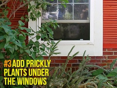 33 1 Defensive Gardening and Landscaping: Protecting Your Home from Burglars