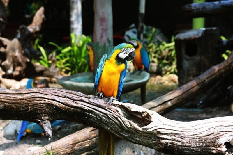 100-cabin-transformation-ideas-39-outdoor-aviary