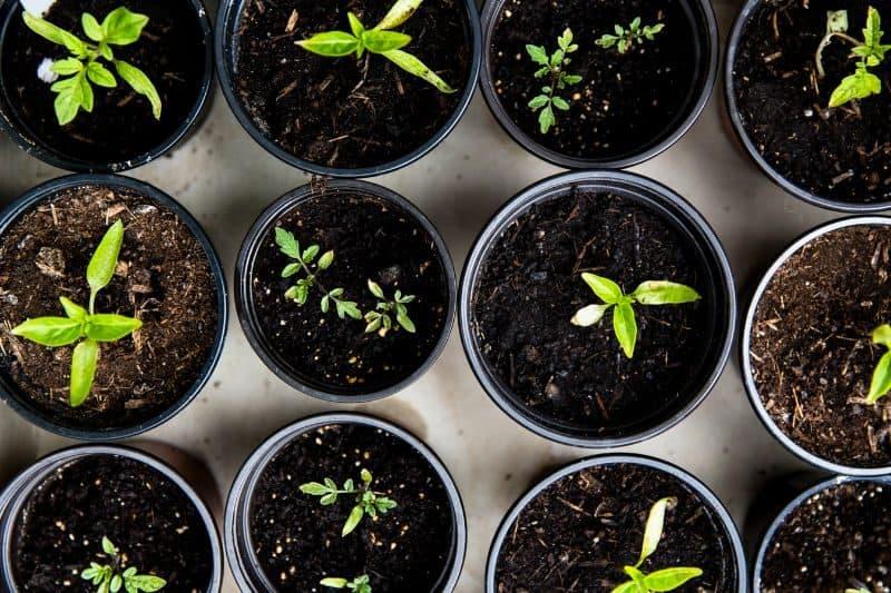 100-cabin-transformation-ideas-4-overwintering-plants
