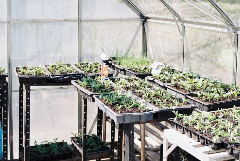 100-cabin-transformation-ideas-40-greenhouse-cabin