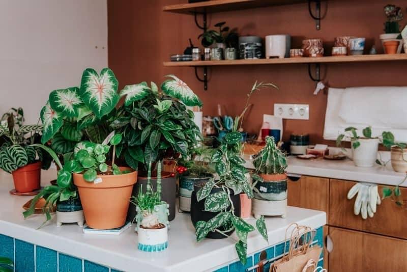 100-cabin-transformation-ideas-90-plant-gallery