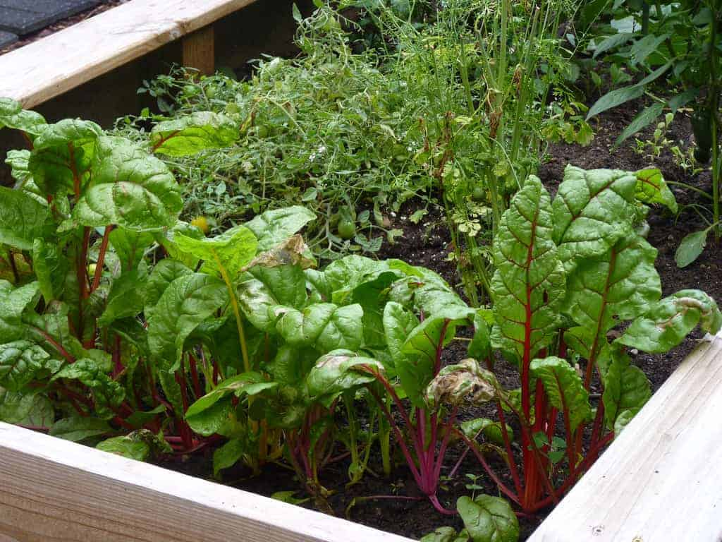 11288599234 42b87f6362 b How to Start a New Vegetable Patch
