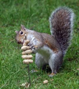 squirrels-in-the-garden