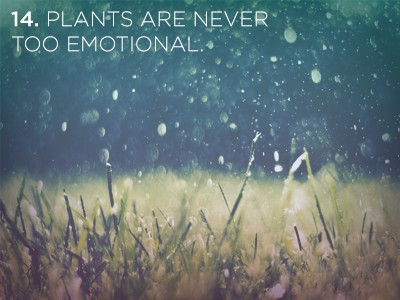 141 1 21 Life Lessons We Can Learn from Plants