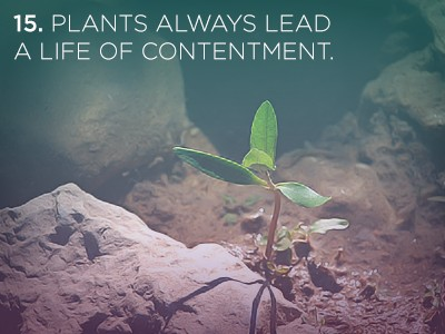 151 1 21 Life Lessons We Can Learn from Plants