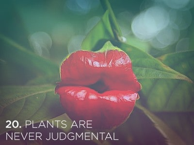 20 1 21 Life Lessons We Can Learn from Plants