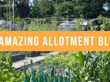 Unusual  Amazing Ways To Use Mirrors In Your Garden  Garden Buildings  With Hot  Amazing Allotment Blogs With Lovely Garden Irigation Also Viva Garden Kilsyth Menu In Addition Winter Garden And Toddler Garden As Well As Wooden Garden Ornaments Additionally Electric Garden Lights Low Voltage From Gardenbuildingsdirectcouk With   Hot  Amazing Ways To Use Mirrors In Your Garden  Garden Buildings  With Lovely  Amazing Allotment Blogs And Unusual Garden Irigation Also Viva Garden Kilsyth Menu In Addition Winter Garden From Gardenbuildingsdirectcouk