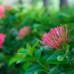 20140830 DSC 6035 150x150 Container Gardening: Top Tips For Success