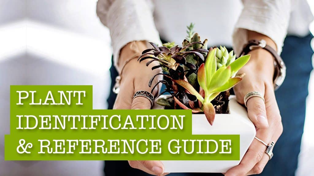 your ultimate plant identification useful reference guide - House Plant Identification Guide By Picture