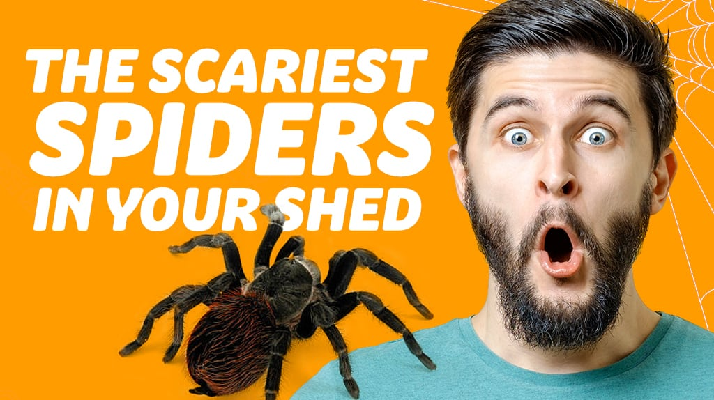 The Scariest Spiders You'll See In A Shed