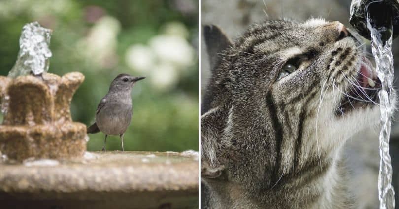 5-reasons-to-get-water-feature-fountains-4-it-attracts-bird-and-wildlife-to-your-yard