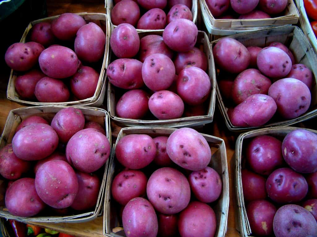 5087912635 3f0480714e b Health Benefits of Growing Purple Potatoes