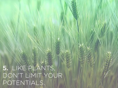 54 21 Life Lessons We Can Learn from Plants