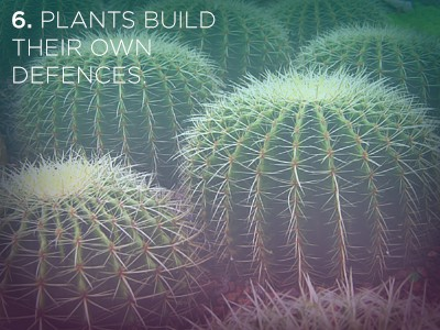 62 21 Life Lessons We Can Learn from Plants