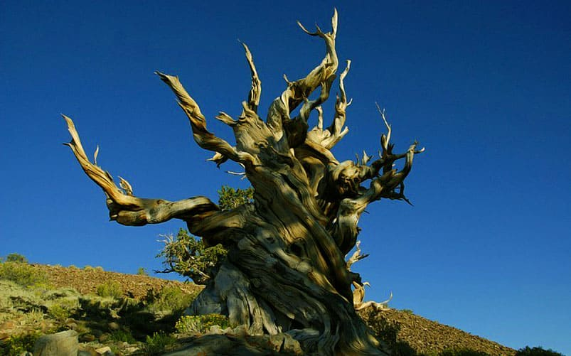 8 11 of the Most Sacred and Iconic Trees from Around the World