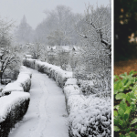 9 Top Tips To Maintain Your Allotments During Winter