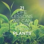 21 Life Lessons We Can Learn from Plants