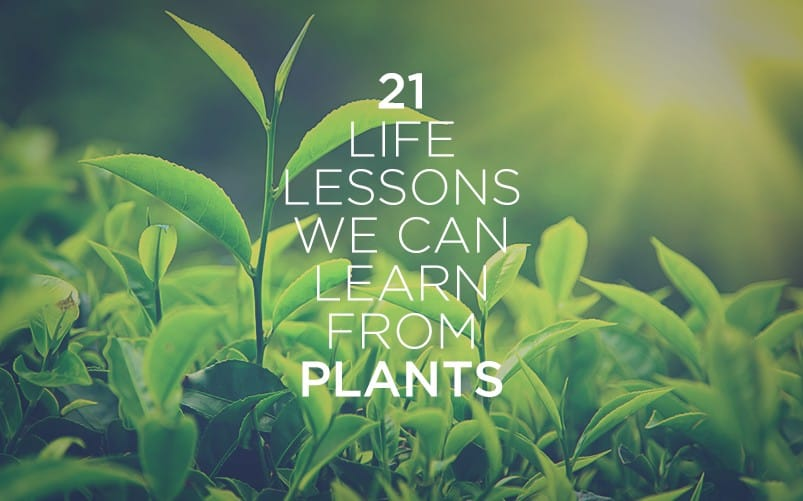 Article13 803x501 21 Life Lessons We Can Learn from Plants