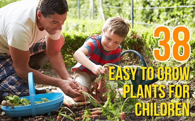 B1 803x501 38 Easy to Grow Plants For Children