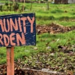 Getting Dirty With The Neighbours – The Benefits Of Community Gardening