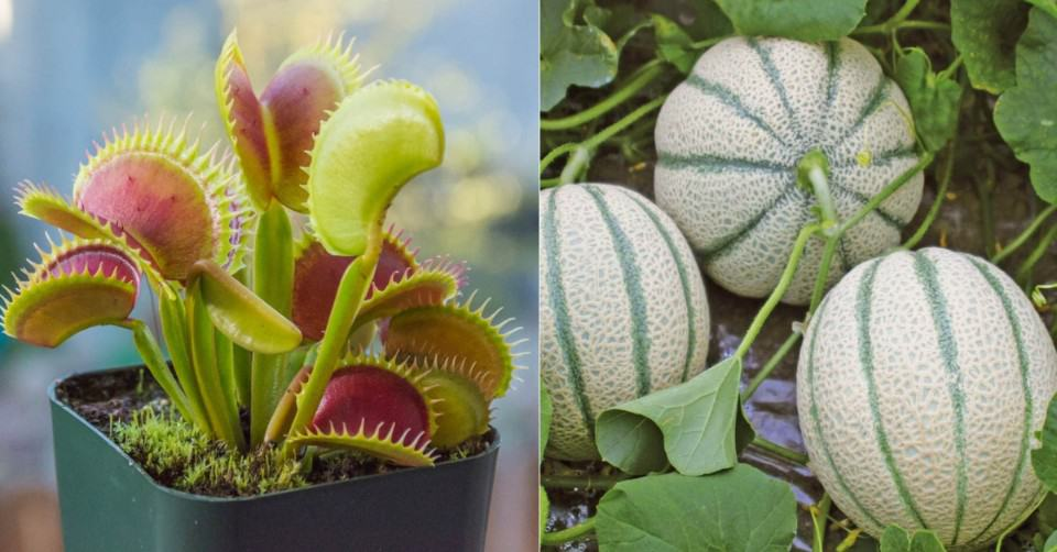 Leave It to the Expert_ Six of the Most Difficult Plants to Grow in Your Garden