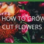 Cut Flowers: Growing and Displaying