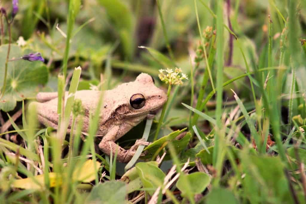 Fun Facts About Frogs