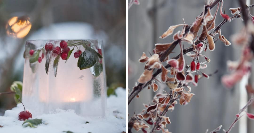 The Winter Gardening Dos And Don'ts You Need To Know