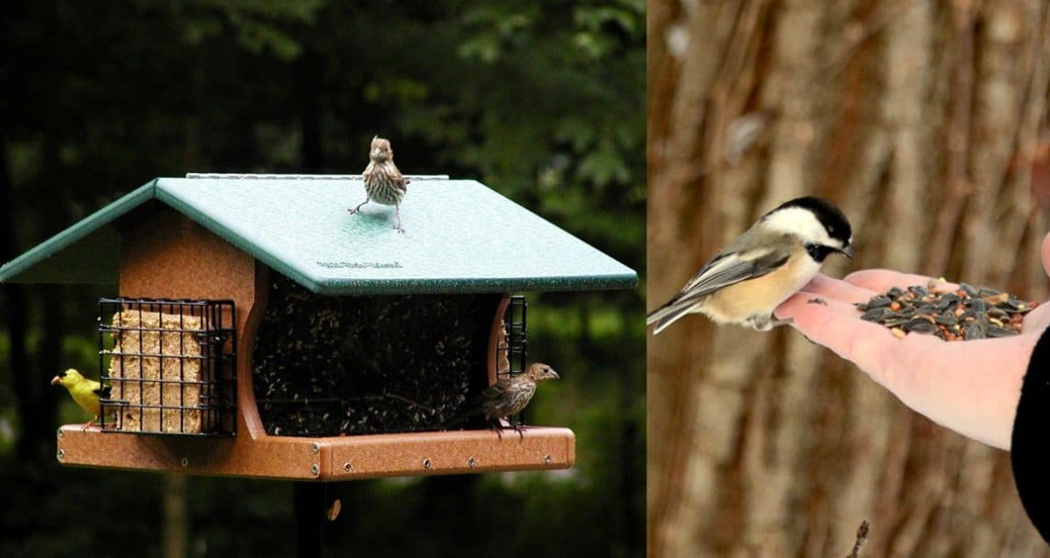 Ways to Attract Wild Birds to Your Garden This Autumn