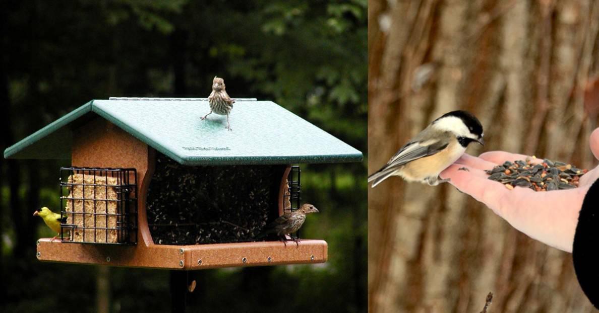 Ways to Attract Wild Birds to Your Garden This Autumn