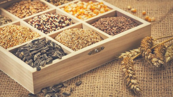With the help on the proper gathering and storing seeds begin your search for these gems hidden in the pods and dried flowers. LIFE AND GARDENING FOR SEASONALLY ADJUSTED: Defining Winter for the Hobbyists, Outdoor Enthusiasts and Thinkers