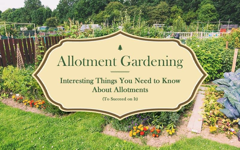 Allotment Gardening: All the Interesting Things You Need to Know About Allotments