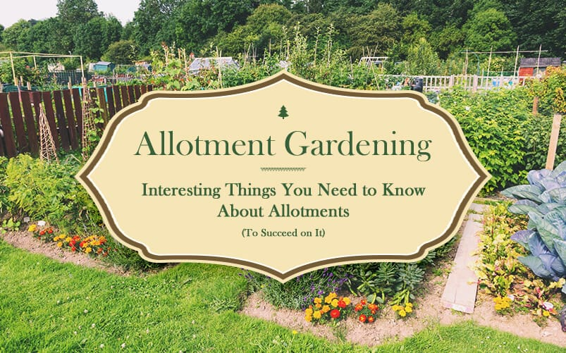 Allotment Gardening and All the Interesting Things About Allotments