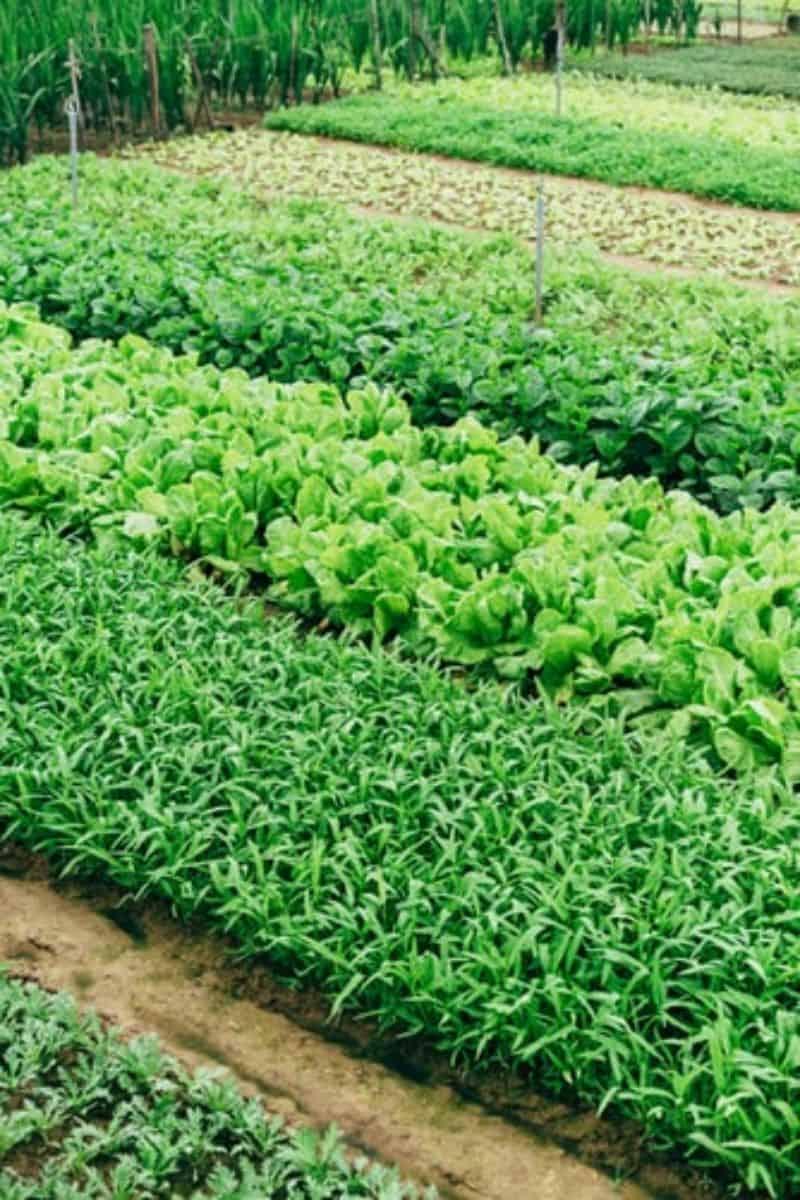 april-gardening-tips-and-chores-5-grow-a-salad-garden-unsplash.jfif