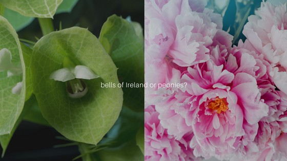 bells of Ireland or peonies 1 LIFE AND GARDENING FOR SEASONALLY ADJUSTED: Defining Winter for the Hobbyists, Outdoor Enthusiasts and Thinkers