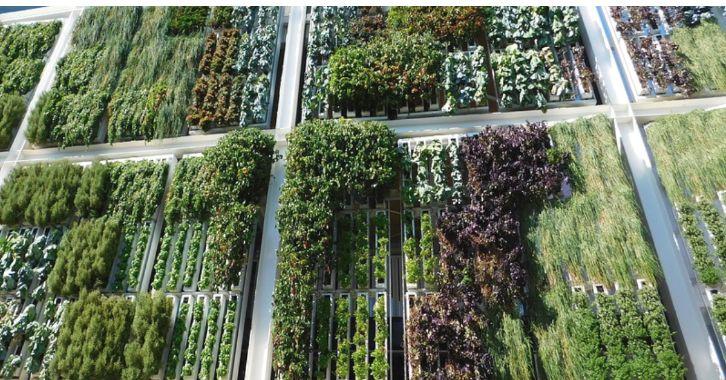 best-plants-for-your-vertical-garden