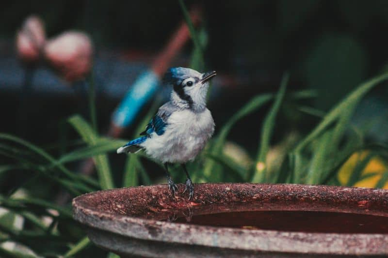 bird-friendly-garden-breeding-3-provide-a-consistent-clean-water-source