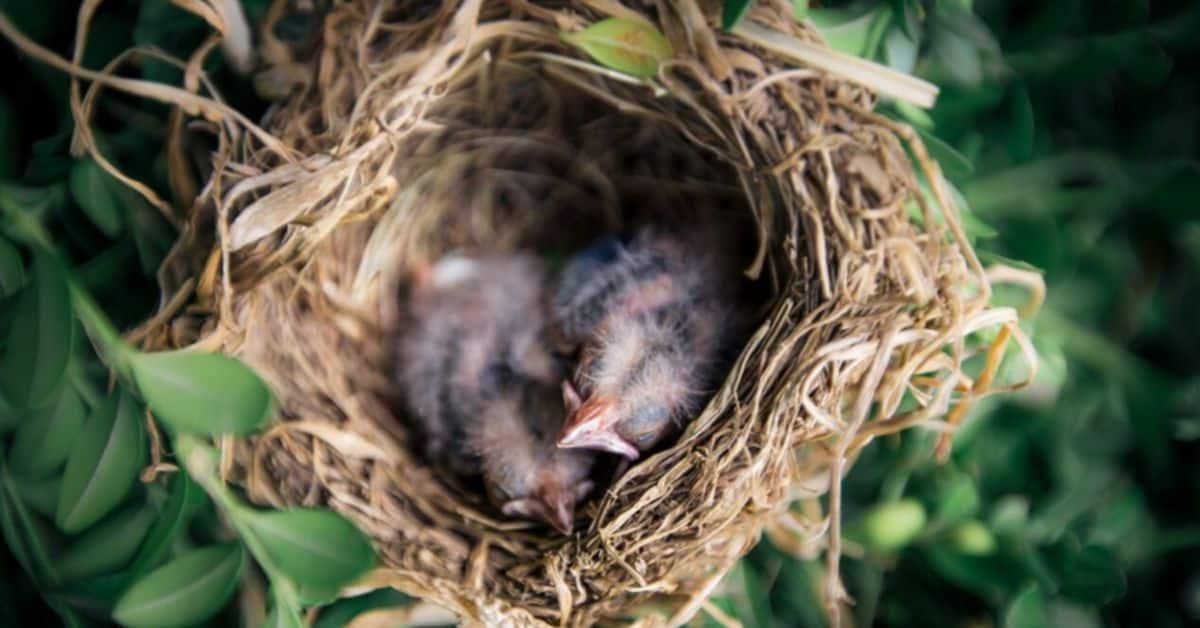 bird-friendly-garden-breeding