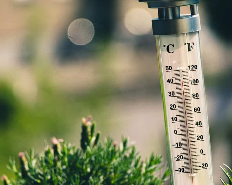 Use a thermometer to track the temperature of your greenhouse