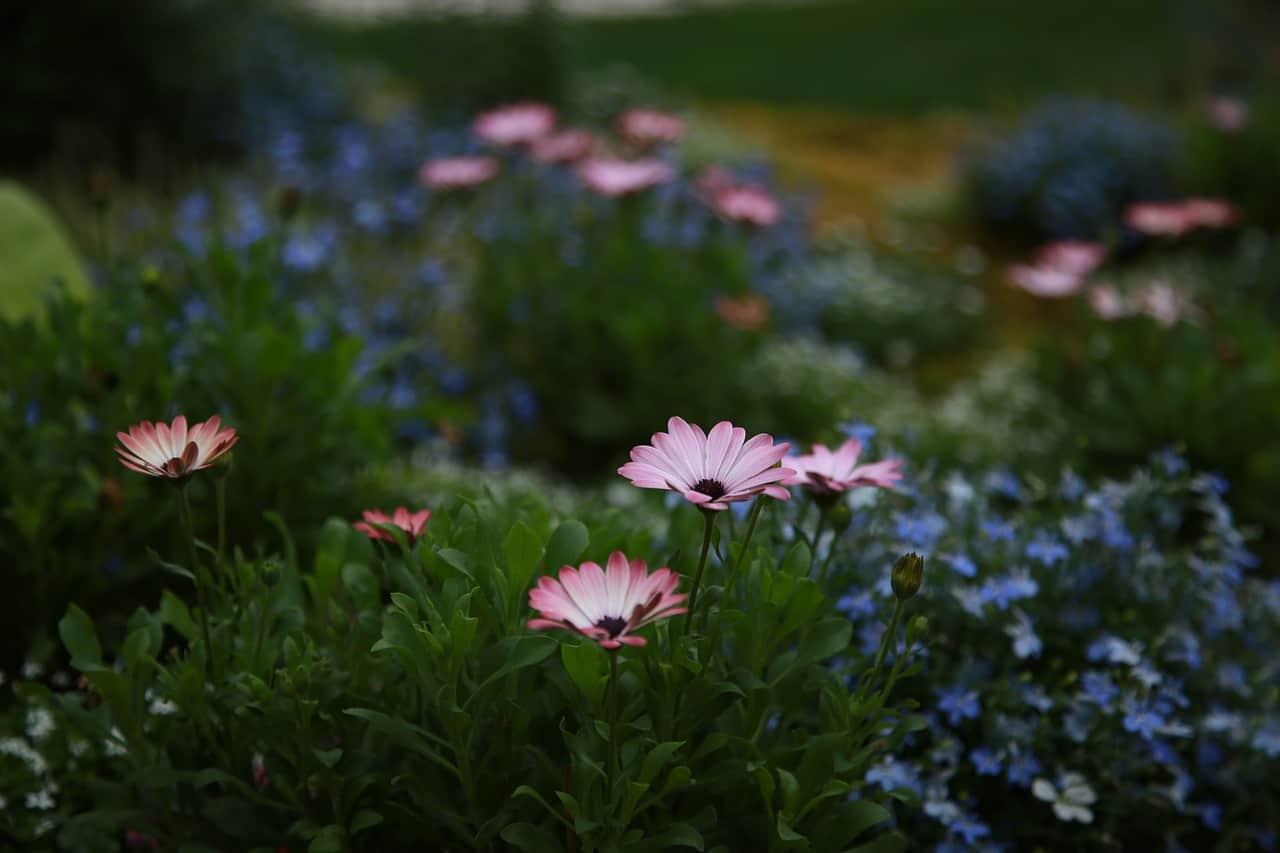 cheat-sheet-garden-tips-5-let-nature-be-wild