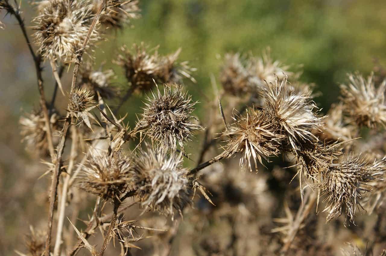 cheat-sheet-garden-tips-7-opt-for-alternative-weed-killer