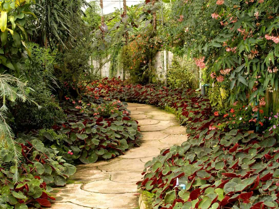 cottage-style-garden-2-curving-pathways-pexels