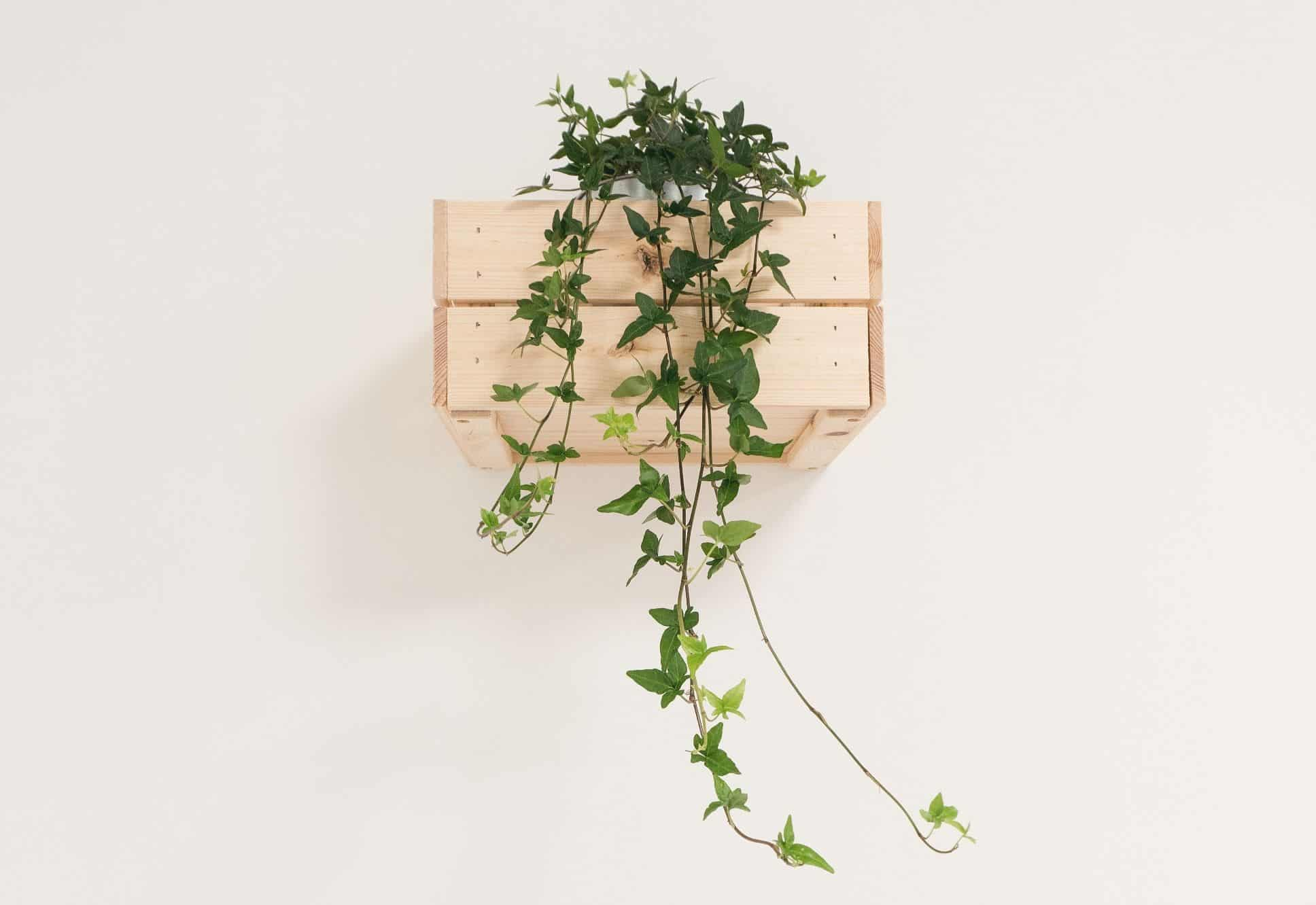 diy-wood-projects-6-small-diy-planter-box-unsplash