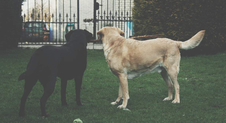 dog-friendly-garden-tricks-10-always-keep-the-garden-gates-shut