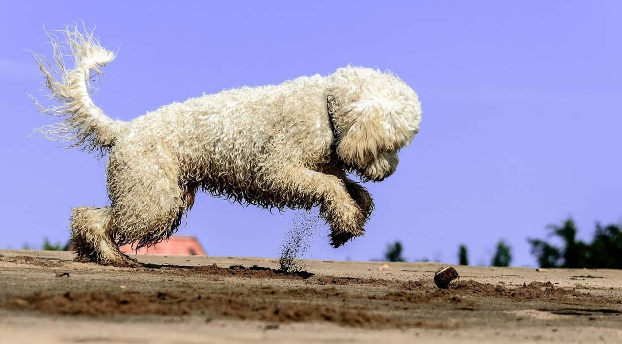 dog-friendly-garden-tricks-2-clean-up-any-exposed-and-unnecessary-soil