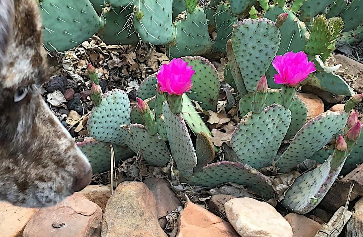 dog-friendly-garden-tricks-5-avoid-growing-thorny-plants
