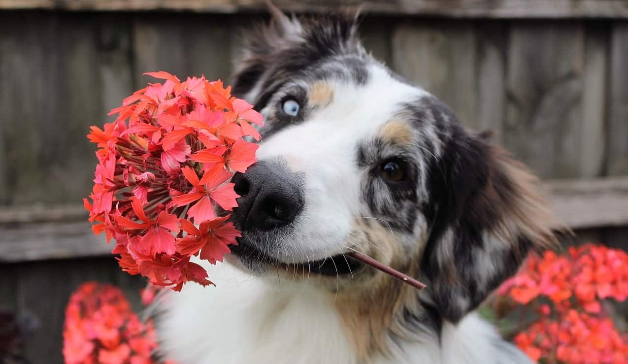 dog-friendly-garden-tricks-6-never-grow-plants-that-can-be-poisonous-to-your-dogs