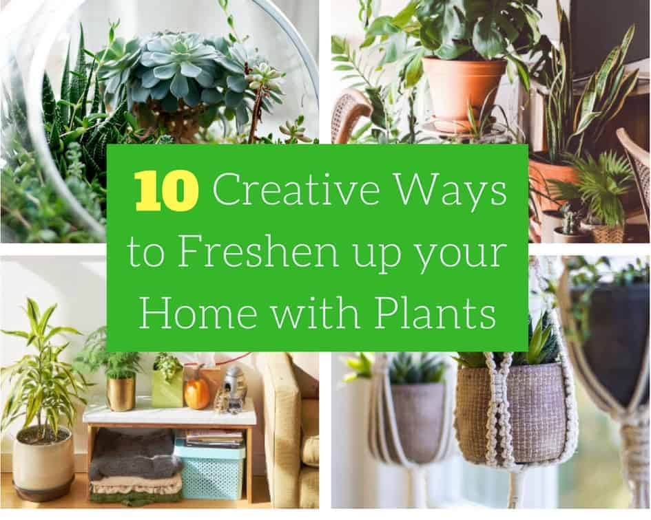 euro tour 10 Creative Ways to Freshen up your Home with Plants