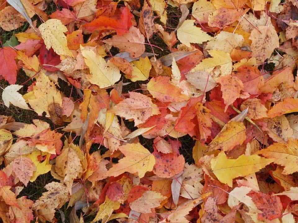 fallen leaves 1712752 960 720 How Not To Be A Garden Lawbreaker